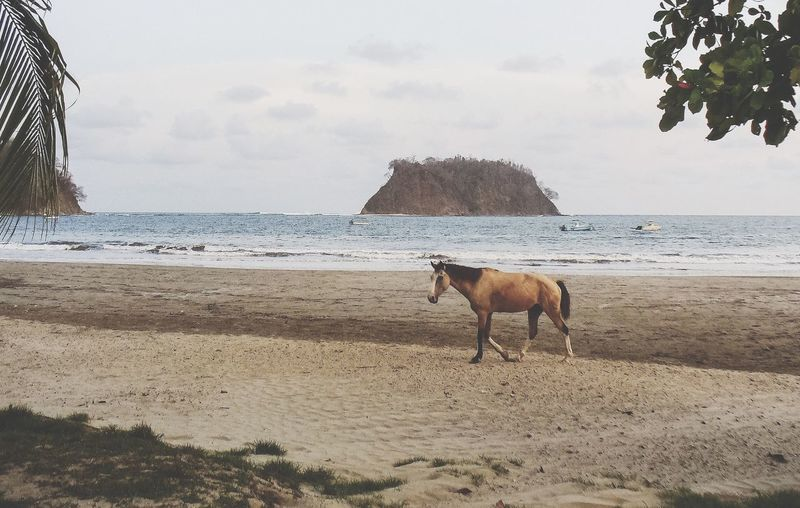 Sea Beach Domestic Animals Horizon Over Water Animal Themes Shore Mammal Water Nature Sand Horse Sky One Animal Livestock Scenics Beauty In Nature Day Authentic Outdoors No People Wild Horse Lonely Beach Walking Search For Food Hungry