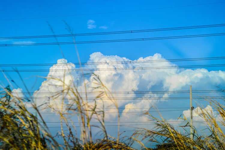 Cloudy blue sky Atmosphere Atmospheric Mood Cab Cloud Cloud - Sky Cloudscape Cloudy Connection Distant Dramatic Sky Dusk Electric Wire Environmental Conservation Foreground Growth Herbaceous Plant Moody Sky Outdoors Plants Sky Storm Cloud Weather