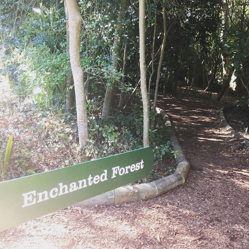 Enchanted Forest Tree Text Communication Tree Trunk Forest Outdoors No People Day Nature Beauty In Nature Kirstenbosch Kirstenbosch Botanical Gardens