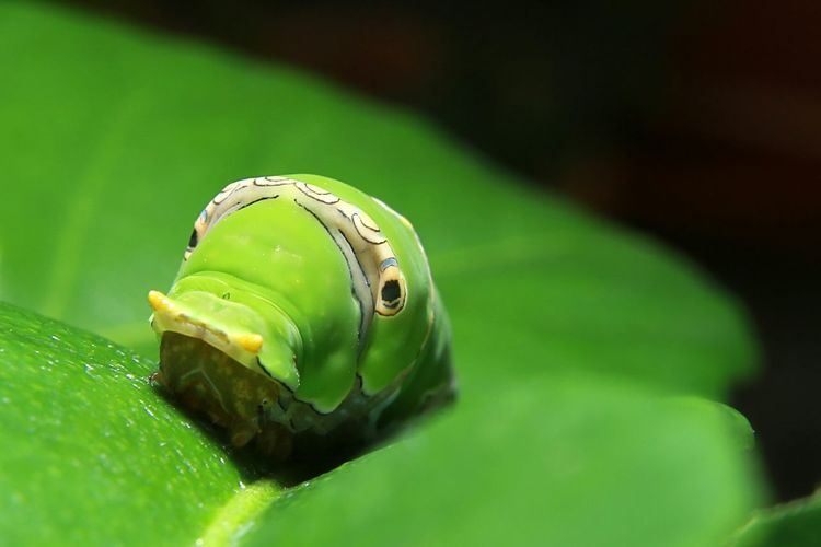 Close-up of green insect