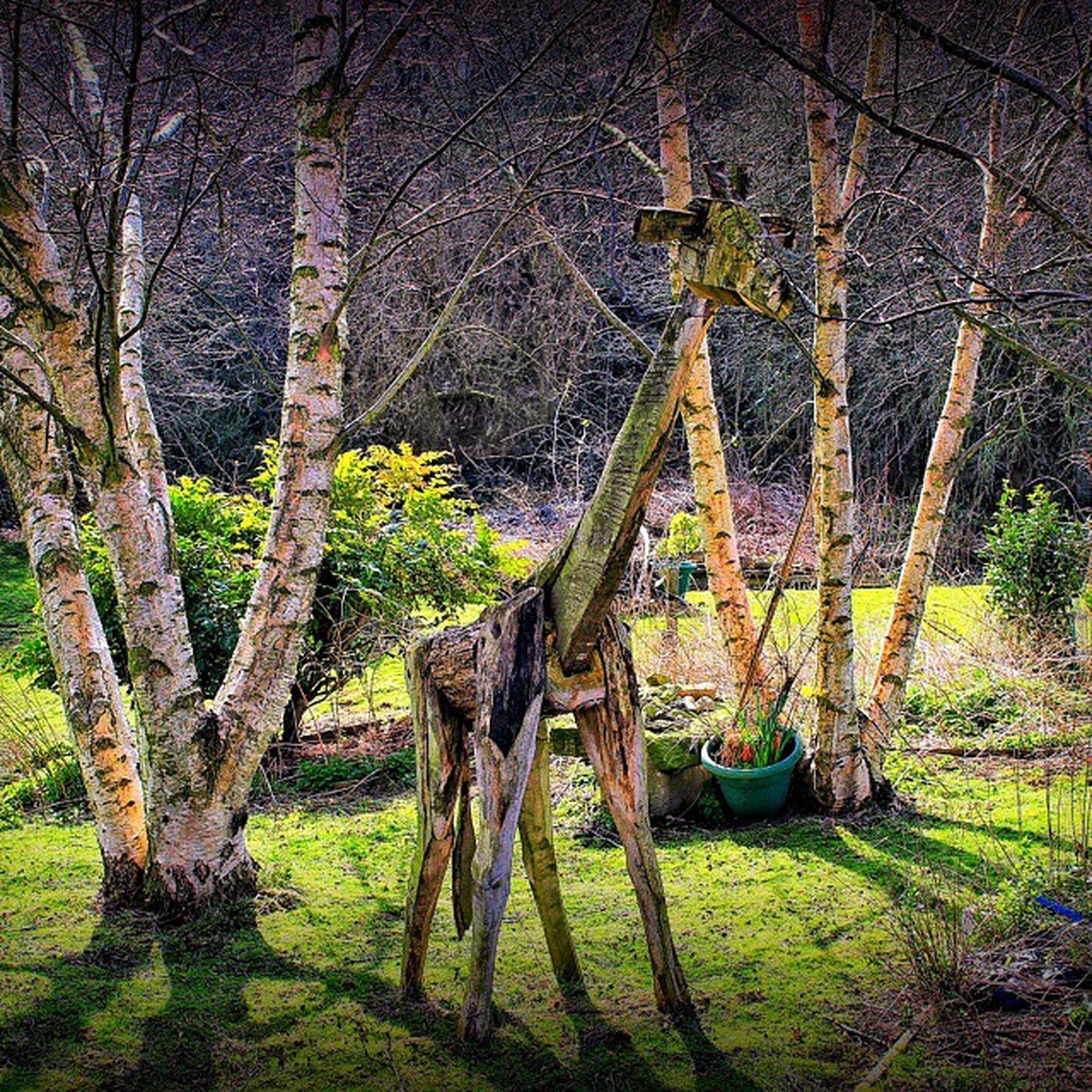 tree, animal themes, grass, field, bare tree, tree trunk, branch, nature, horse, landscape, mammal, one animal, outdoors, growth, day, tranquility, no people, grassy, full length, transportation