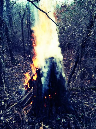 Heat - Temperature Flame Burning Forest Nature Tree Outdoors Day Forest Fire Smoke - Physical Structure Beauty In Nature Beauty In Nature Art In Progress On The Trail Tree Tree Trunk Nature Beauty My Own Style 92781