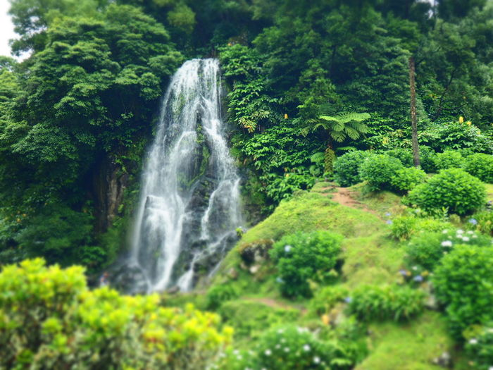 Azores Waterfall Nature Motion Water Beauty In Nature Green Color Long Exposure Tree Scenics Outdoors Growth Forest No People Lush Foliage Day Tranquil Scene Plant Vacations Grass Freshness Açores - São Miguel Island