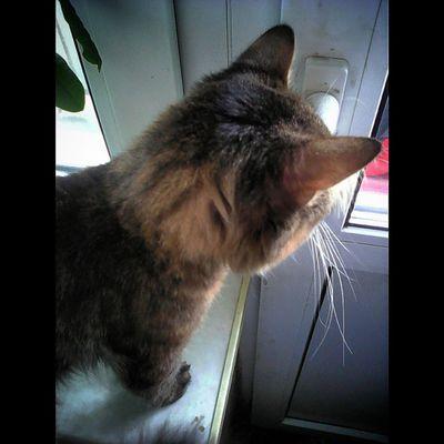 Внимательный Кузя. Кузьма КузьмаКузьмичМуркин ВнимательныйВзглядВОкно ВнимательныйВзгляд МойЛюбимыйКот Kyzya MyLovelyCat kissekatt Kitty KittyCat Catty Katze SquareInstaPic