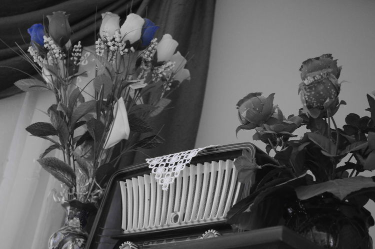 Black & White Black And White Blackandwhite Photography Close-up Color Splash Curtain Dantel Flower Fragility Growth Indoor Indoor Plants Indoors  Izmir Lace No People Nostalgia Nostalgic  Old Old Radio Petal Plant Potted Plant Radio My Favorite Place