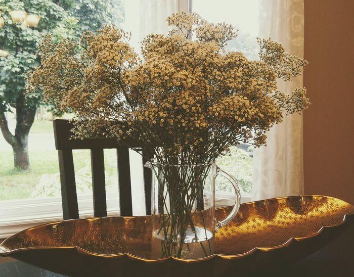 No People Indoors  Flowers