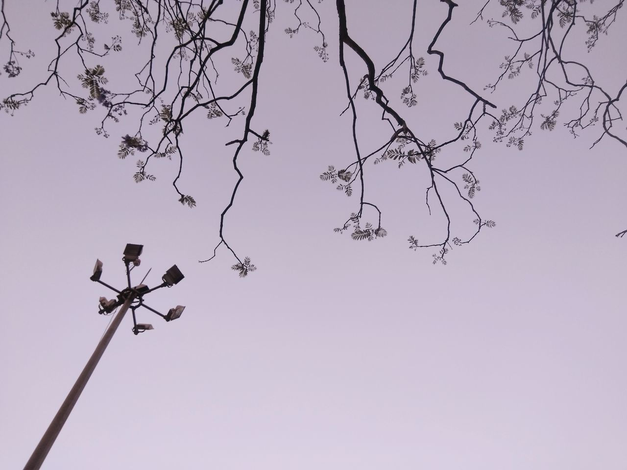 low angle view, day, outdoors, guidance, weather vane, no people, direction, communication, nature, clear sky, tree, sky, bird, animal themes