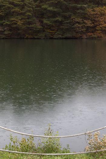 autumn raining pond in Namwon, Jeonbuk, South Korea Pond Rain Raining Tranquility Beauty In Nature Day Grass Lake Nature No People Outdoors Plant Raining Pond Rainy Day Scenics Tranquil Scene Tranquility Tree Water