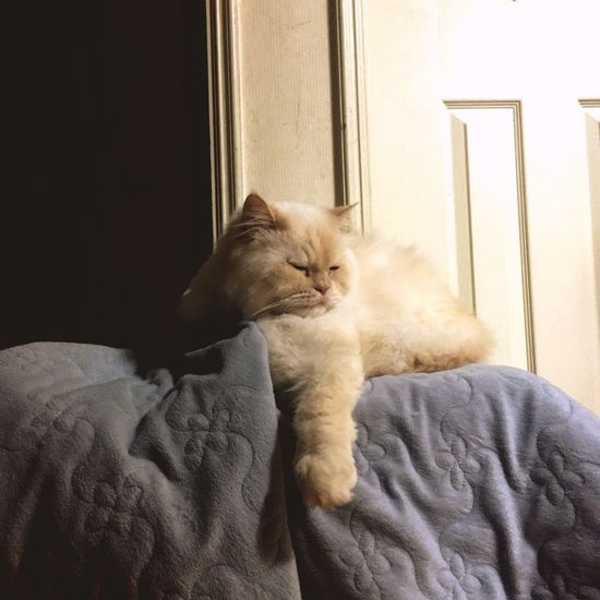 GRRRRRRR! Happiness Heema Cat