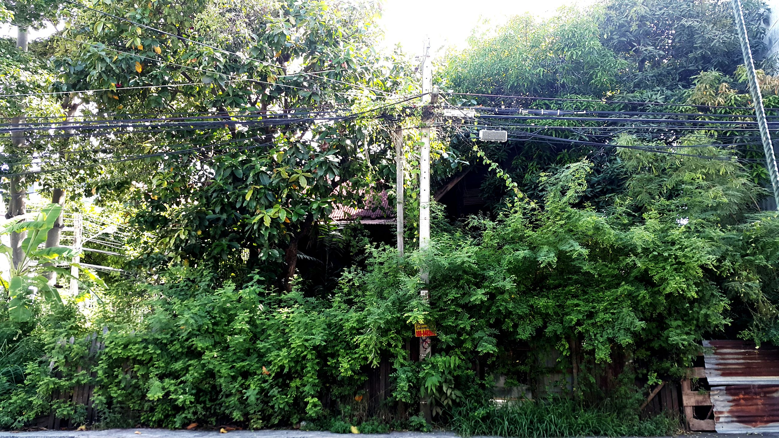 tree, growth, plant, green color, built structure, architecture, fence, nature, building exterior, ivy, house, lush foliage, branch, day, outdoors, no people, railing, tranquility, growing, forest