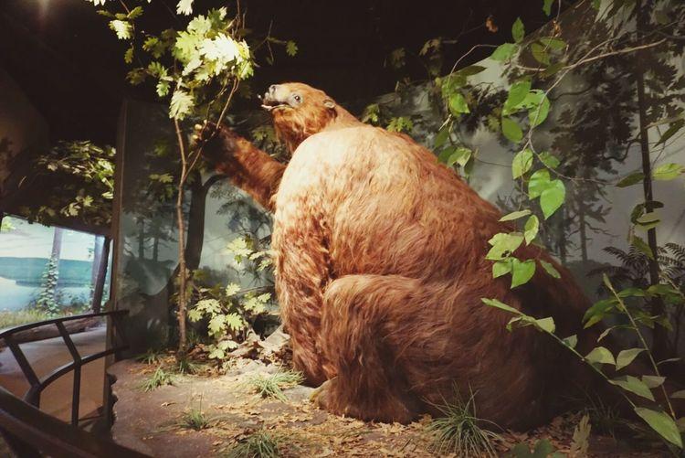 Sloth Historic Animal Vertebrate Plant Nature