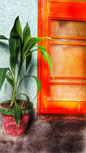 Rule of thirds Leaf Plant Part Green Color Red Plant Nature Growth Wood - Material Beauty In Nature Outdoors Architecture Day Wall - Building Feature Freshness Built Structure Close-up Houseplant No People Potted Plant Door