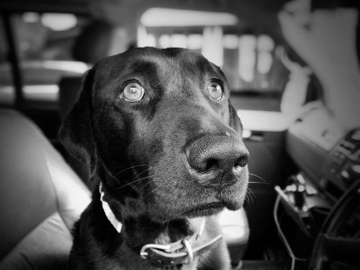 That doggie in the window...he's not for sale Streetphoto_bw EyeEm Best Shots - Black + White The Street Photographer - 2015 EyeEm Awards The Portraitist - 2015 EyeEm Awards