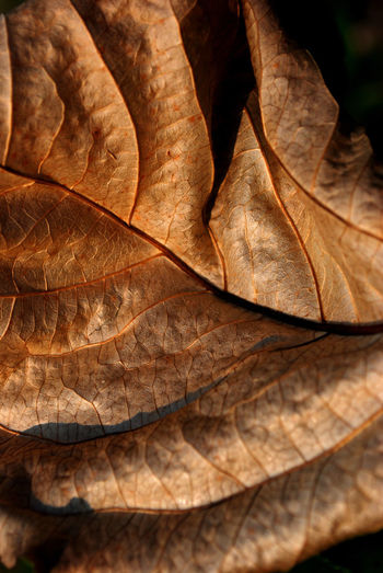 Full Frame Shot Of Dried Leaf