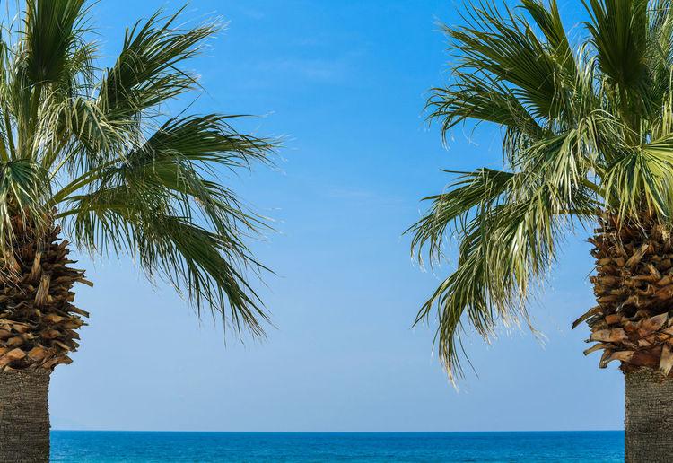 Palm tree by sea against blue sky