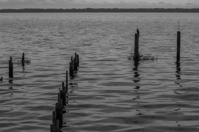 Black And White Blackandwhite Photography Blackandwhite Lake Monroe Sanford GayneGirlPhotography EyeEm Gallery Eyembestshots EyeEmBestPics EyeEm Best Shots Eyeemphotography Eye4photography