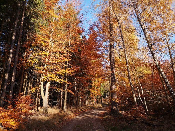 Harz im Herbst