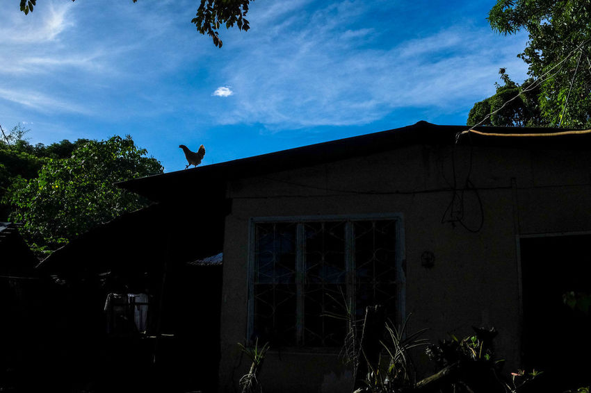 Animal Themes Day House Low Angle View Nature No People One Animal Photo Of The Day Check This Out Photo Of The Week Provincelife Silhouette Sky Tree
