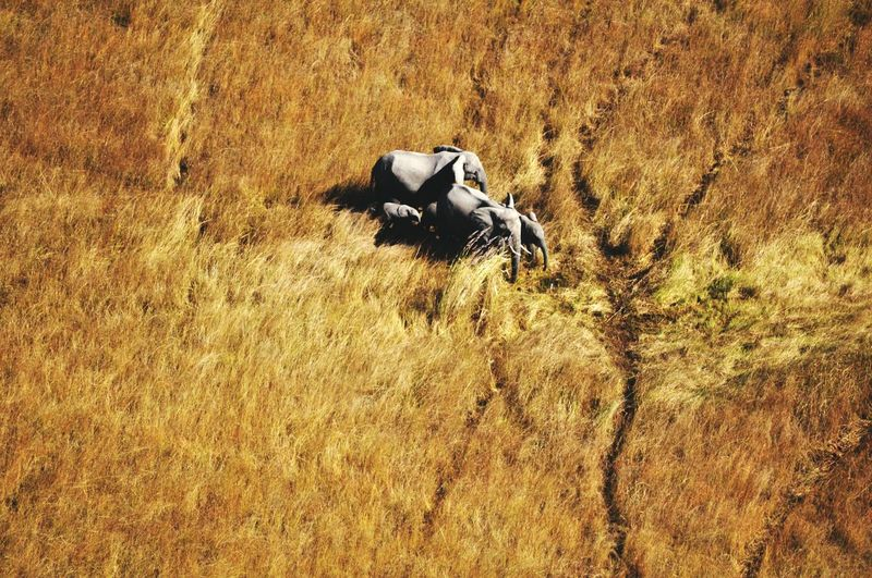Elephants Family Viewfromabove Scenic View Flight View From Above View From An Airplane Herde Botswana Okavango Delta Landscape Grass Grassland Birdseyeview Africa Landscape_photography Wildlife Wildlife & Nature Bigfive Animals Animals In The Wild Mammals Safari Colour Of Life The Great Outdoors - 2017 EyeEm Awards
