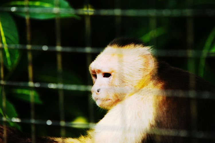 Close-up of monkey at zoo