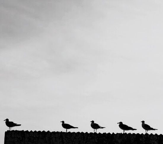 Birds Ready Flight Overlooking Groupie Blackandwhite Flightclub Bird Photography Monochrome Photography Welcome To Black Long Goodbye
