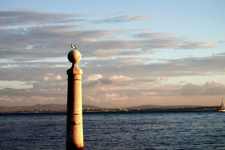 Lisboa Lisbon Bird Sunset Eyeam_bestshot Sun Light Sea OceanCity Portugal_em_fotos Hello World Home Is Wherever I Am With You