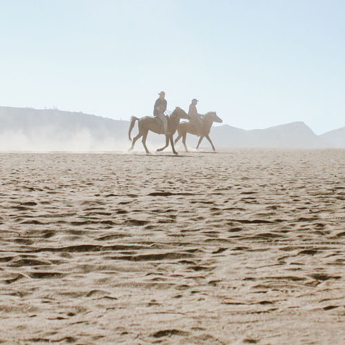 DesertLive For The Story Animal Outdoors Animal Wildlife Landscape Nature Arid Climate Animals In The Wild Sand Sky Day Tranquility Full Length Sand Dune Rural Scene No People Scenics Beauty In Nature Mountain Animal Themes