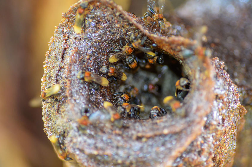 Close-up Animal Themes Animal Wildlife Invertebrate Selective Focus Nature Animal Animals In The Wild No People Group Of Animals Beauty In Nature Large Group Of Animals Day Insect Outdoors Colony Macro Beehive Land Marine Lichen
