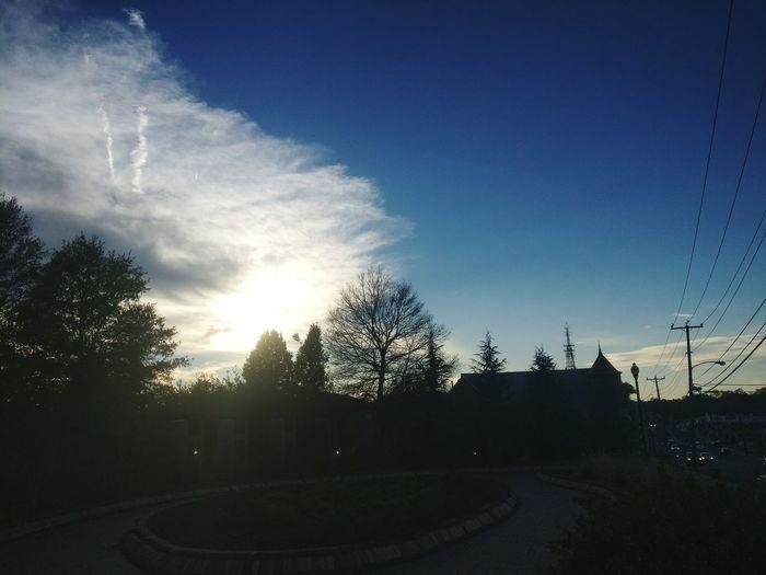 Tree Day Sky