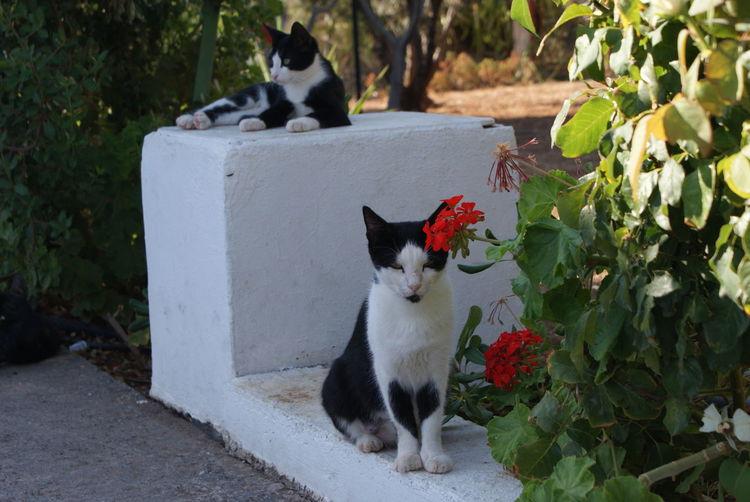 Pets Domestic Cat Domestic Animals Feline Mammal Animal One Animal