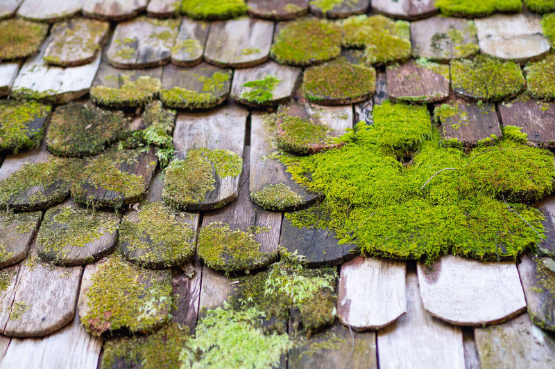 View of old damaged wooden roof house covered by moss.