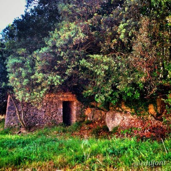 Barraca de Vinya de Torrecabota Artes Calders vinsdelbages Bages Catalunya gaudeix_cat descobreixcatalunya catalunyaexperience clikcat paisatges landscapes primavera pedraseca