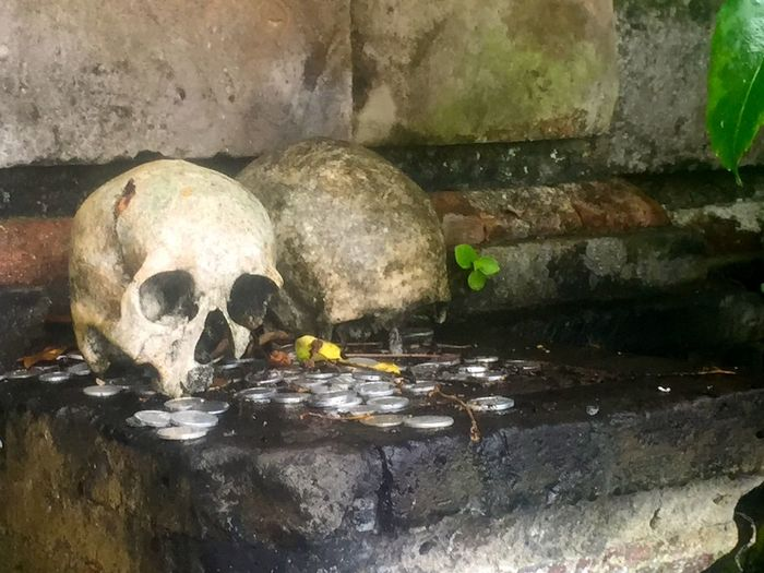 Skulls Under a Banyan Tree in Trunyan Island Bali Aga Beauty In Nature Buried Cemetery Ceremony Cute De Death Funeral Moss Religion Ritual Skulls Spirituality Tradition Tranquility Trunyan Village