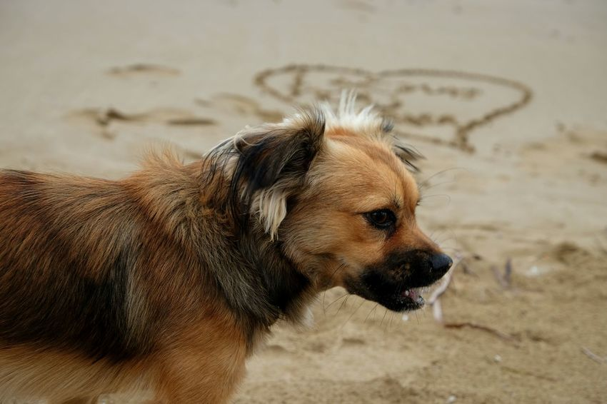 EyeEm Selects Dog Pets Sand One Animal Close-up Animal Themes Outdoors Beach No People Domestic Animals Mammal Day Colors Horizon Over Water Beauty Animal Wildlife Watercolor Animal Cute Beauty In Nature Photographer Landscape Blue Ozean