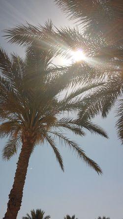 Beach Beauty In Nature Clear Sky Egypt Palm Tree Palmen Sky Sun Sunlight Throwback Travel Vacation Holiday Outdoors Trip Strand Urlaub