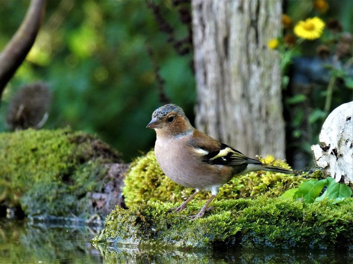 Close-up of bird perching on moss covered rock