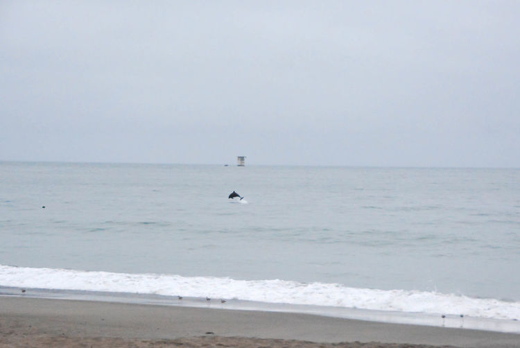 Ready to take on the day Dolphins Baker Beach Ocean Pacific Ocean Wildlife Nature