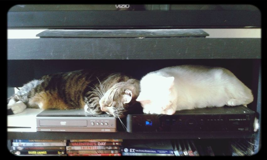 My kitties sleeping on my tv box♡ Animals Cat Sleeping Cat Animallovers