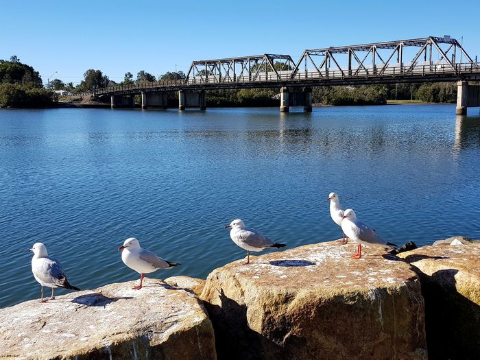 Seagulls perching on wooden post in river