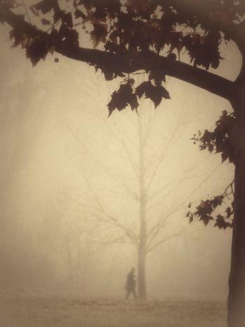 Tree Fog Nature Day Autumn🍁🍁🍁 Autumn Beauty In Nature Backgrounds Vintage Moments Autumn Leaves Autumn Colors Relaxing Capturemoment Taking Photos EyeEm Nature Lover Nature Tree Landscape Enjoying Life Natura Urbana Monochrome