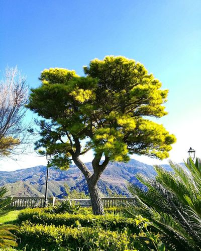 Green Serenity Tree Tree Nature Growth Sky Green Color No People Outdoors Beauty In Nature Plant Day Blue