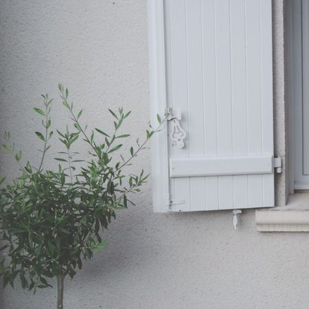 Window Nature Urban Nature Minimalism