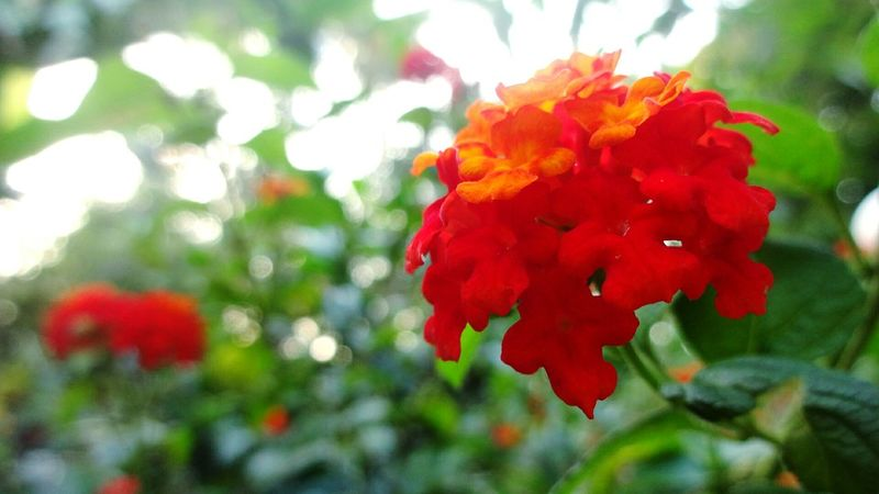 Pastel Power Flower Colors....... Colors Of Autumn . Colourful Pop. Colour Pop Red Flower At Its Best Red Flower Red Flowers Red Flower Among Green Showcase March Enjoying Life Live Naturephotography Nature_collection Nature Photography Naturelovers