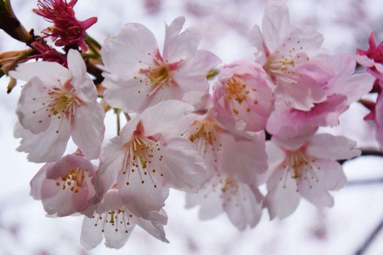 木場公園に桜が綺麗に咲いてた^ ^ Japan EyeEm Nature Lover Tokyo Days Flowers