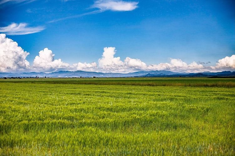 The green line. Sky Cloud - Sky Field Landscape Scenics Beauty In Nature Agriculture Outdoors Green Color Nature Grass Mountain Blue Day Love Dreaming