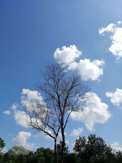 🌲+☁️=..... No Filter, No Edit, Just Photography No Filter EyEmNewHere Creativity Sky And Clouds No People Cloud - Sky EyeEm Pixelated Tree Blue Sky Cloud - Sky Single Tree