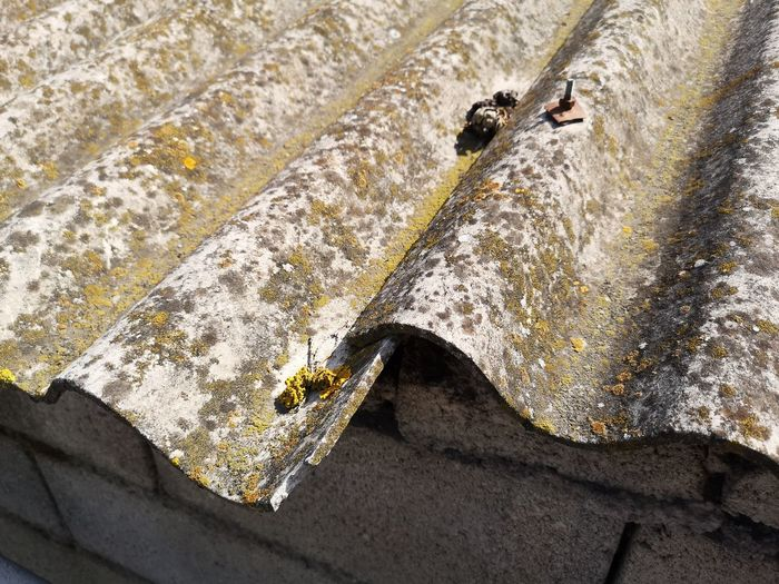 Cancer Pollution Problem Asbestos Asbestos Roof Panel Sunlight High Angle View Close-up Architectural Detail
