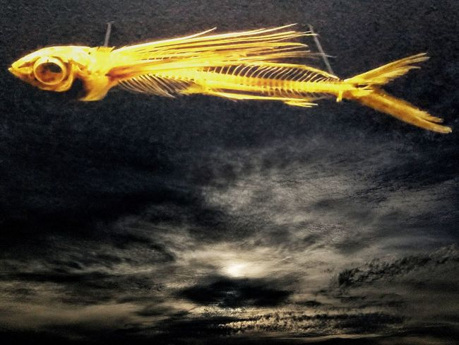 One Animal Nature No People Animal Themes Outdoors Close-up Sea Life Day UnderSea Sky Abstract Oddities Atmosphere Curiosities Surrealism Strange Abstract Art Abstract Photography Backgrounds Bones Skeleton Fish.