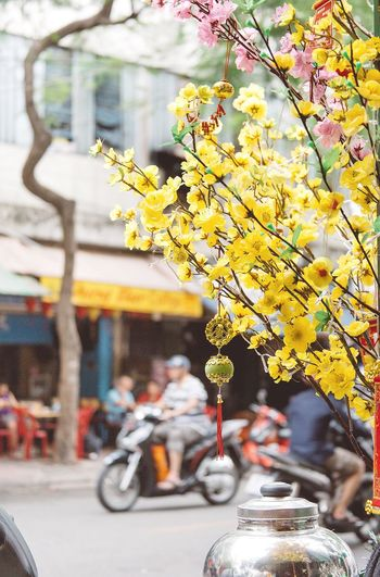 Yellow flowering plant in city