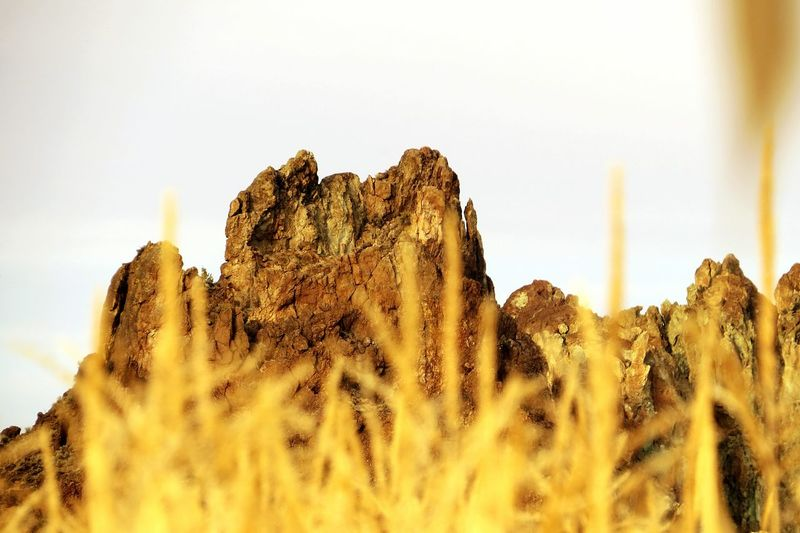 Smithrocks Central Oregon Corn Stalks And Smithrocks